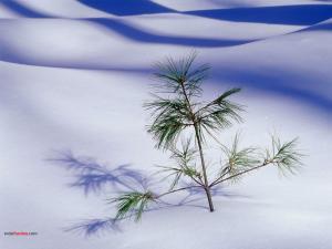 Plant poking through the snow