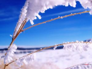Twig with snow