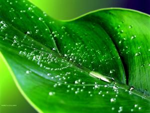 Explosion of water droplets on a green leaf