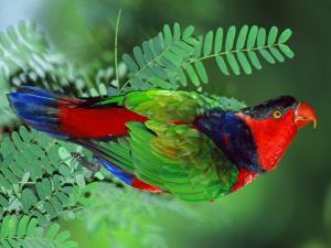 Parrot of vivid colors