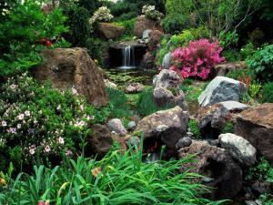 A very flowery pond