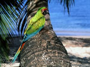 Parrot in the trunk of a palm