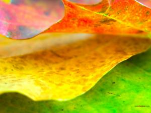 Leaves with nice colors
