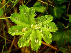 Water drops over a plant