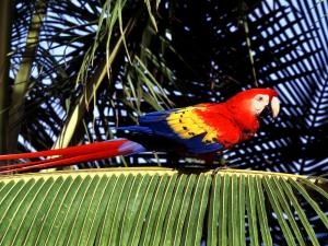 Parrot on a palm leaf