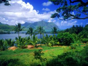 Sea and palm trees