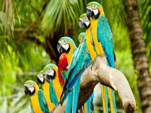 Row of parrots