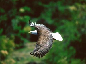 Eagle planning