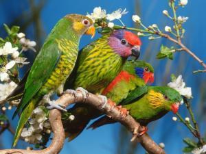 Parrots of various colors