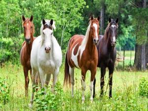 Variety of horses