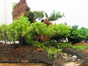 Plants and stones