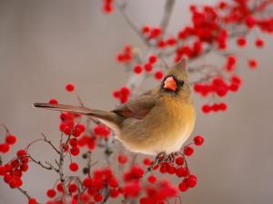 Bird perched on a branch with red berries