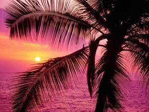 Sunset of purple lights