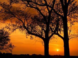 Backlit trees at sunset