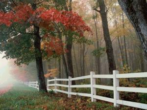 White picket fence in the field