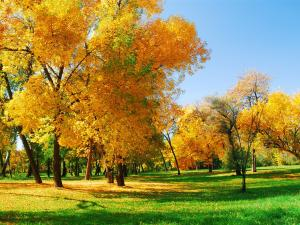 Trees with yellow leaves and green grass