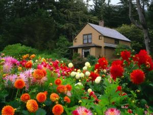 Cottage in the wood surrounded by flowers