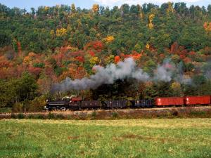 Steam train surrounding a forest