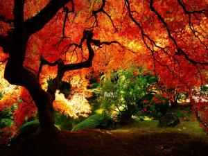 In the shade of a tree with red leaves