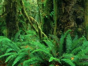 Ferns and mossy logs