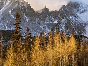 High mountain vegetation