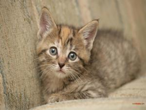 Camouflaged kitten