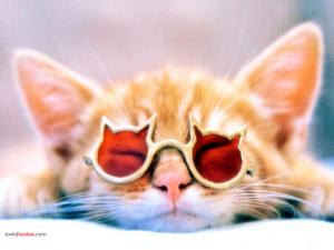 Cat with feline sunglasses