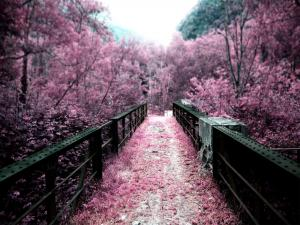 Bridge dyed of purple vegetation