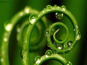 Spiral stem