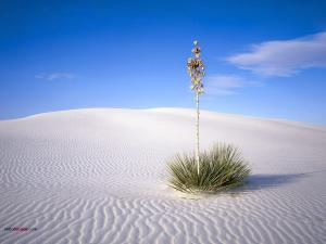 A plant in the white sand of the desert