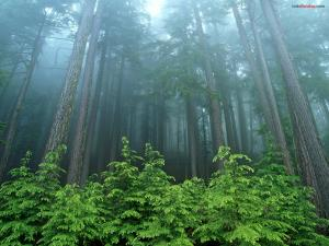A forest of very tall trees