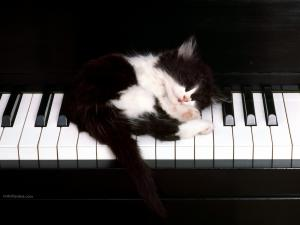 Kitten on piano keyboard