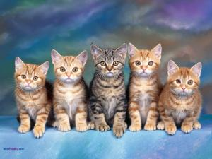 Five kittens, attentive and obedient