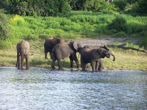 Elephants on the river shore