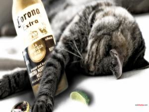 This cat drank a Corona beer