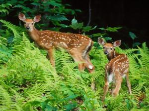 Deers between pasture
