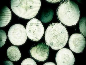 Cutted trunks