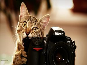 A photographer cat