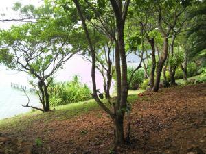 Vegetation in Guanaja Island (Honduras)