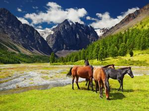 Horses freely grazing