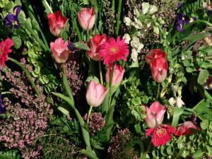 Some wild flowers