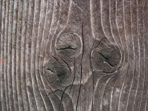 Knots in the trunk of a tree