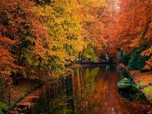 Trees in autumn beside the canal