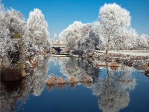 Snowy trees that are reflected in water
