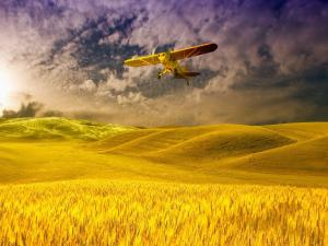 Cessna plane flying over wheat fields