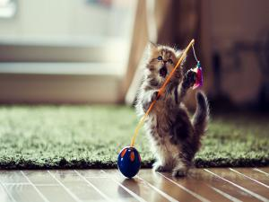 Small kitten playing