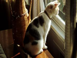 Cat observing by the window
