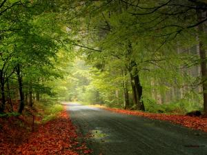 Road between trees and leaves
