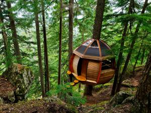 A room in the forest (Whistler, Canada)