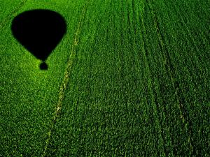 Flying in balloon over a cornfield